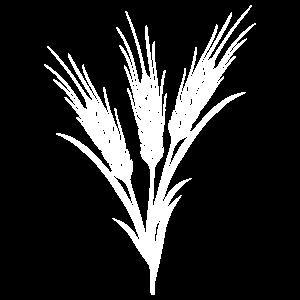 voluminis-white